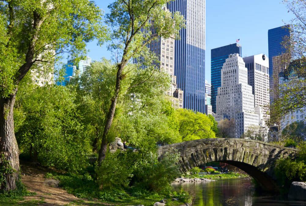 Door de bomen de stad niet meer zien